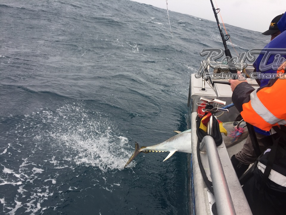 Tuna Fishing Melbourne