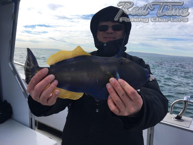 Mornington Fishing Charters