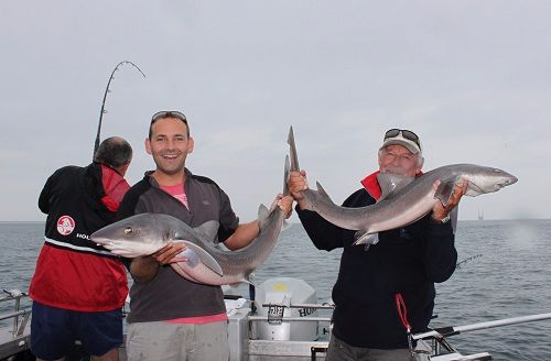 Gummy Sharks Fishing Charters Port Phillip Bay RTFC