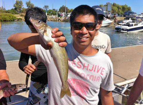 Westernport Whiting Fishing Charters