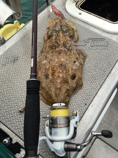 Cuttle Fish in Port Phillip Bay with Matt Cini