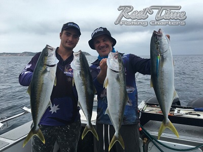 Yellow Tail King Fishing in Melbourne with Reel Time