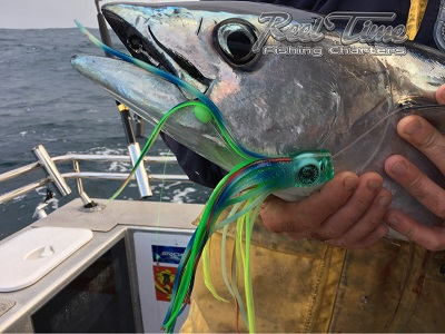 Bluefin Tuna Caught on Zacatak Lure with Matt Cini