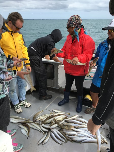 Reel Time Fishing,Yellow Tail Kingfish,Whiting, Snapper and Blue Fin Tuna Portland