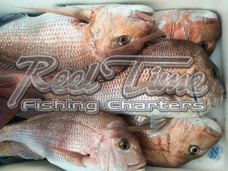 Port Phillip Bay Fishing Charters October 2016 weekend 10th im