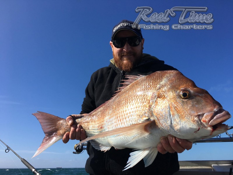 Port Phillip Bay Snapper, Whiting, King Fish, Squid, Gummy Fishing Charters January 2017