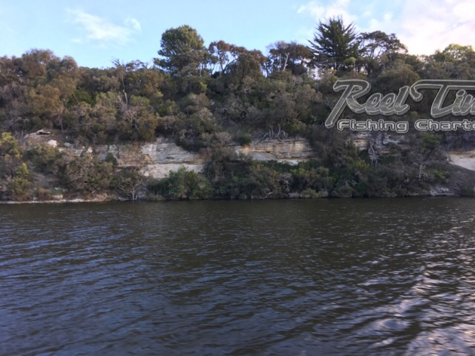 Mulloway Fishing in the Gleneld River Victoria